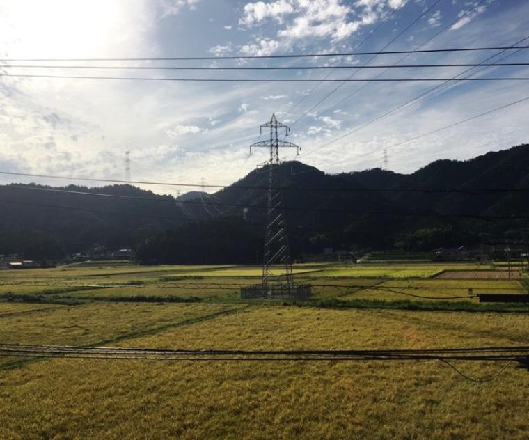 rice fields fukui